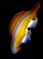 This deep space alien object is the photo of a jellyfish which suffered extensive back scatter 